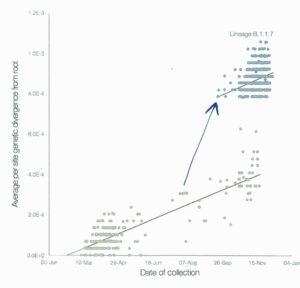 Genetic evolution of the B.1.1.7 strain